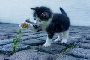 assurance chat sans limite âge