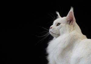 chat sans identification