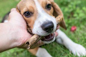assurance chien sans avance de frais