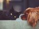 assurance animaux sans délai de carence