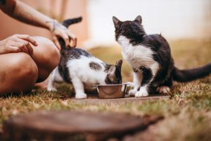 chat alimentation