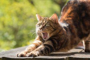 chat vomit